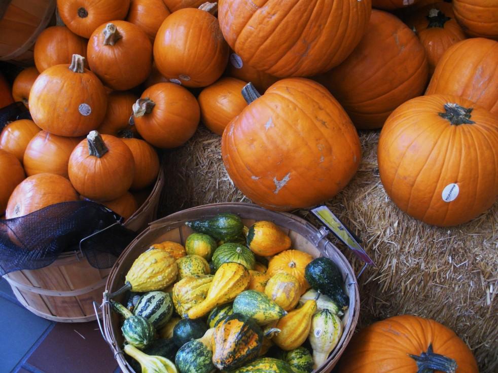 Pumpkin assortment 4-Duo Dishes